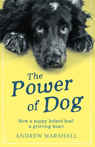 The Power Of Dog cover